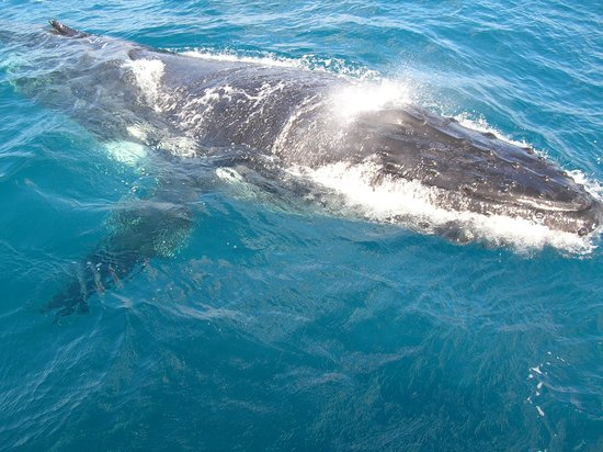 Freedom Whale Watch: One of the whales
