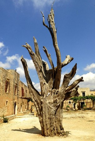Sacred Monastery of Arkadi : L'albero bruciato