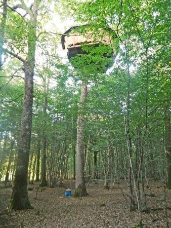 Les Cabanes du Bois Landry: Planté dans les arbres notre petit nid