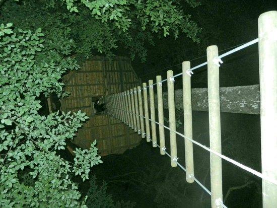 Les Cabanes du Bois Landry: Vue du haut de l'échelle de nuit