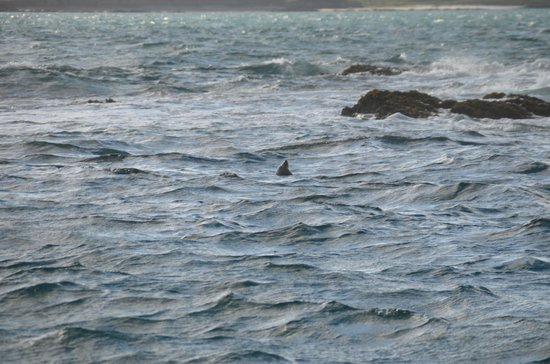 Whale Watch West Cork : phoques