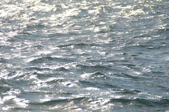 Whale Watch West Cork : reflets argentés