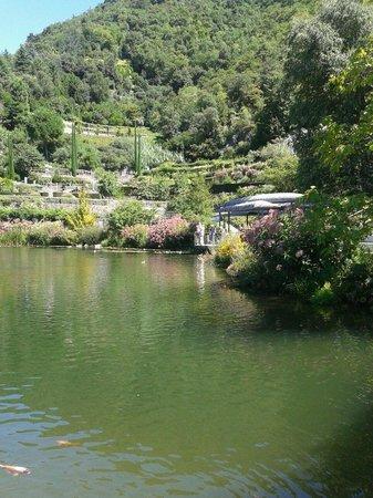 I Giardini di Castel Trauttmansdorff : Lago ninfee
