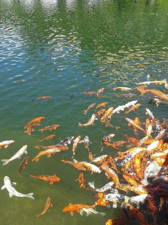 I Giardini di Castel Trauttmansdorff : Pesci del lago