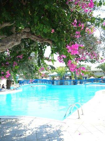 Filerimos Village Hotel: bougainvillier