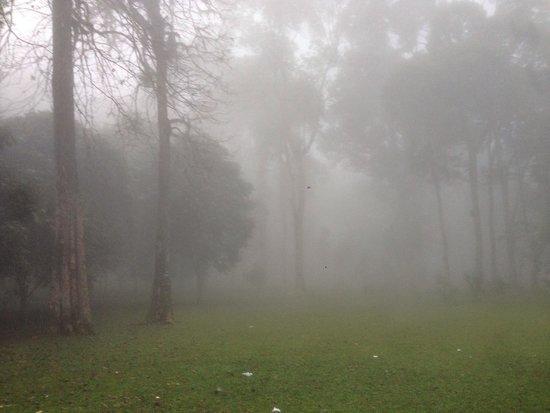 Bali Treetop Adventure Park: Bali Botanical Garden