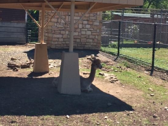 Forsyth Park : lama