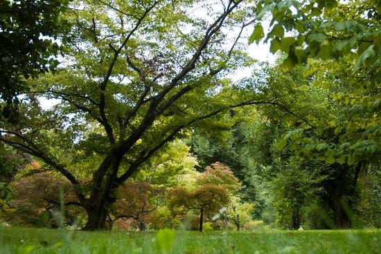Villa Taranto: Il giardino