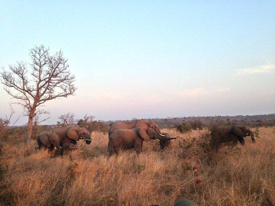 Tydon Bush Camp : Elephants