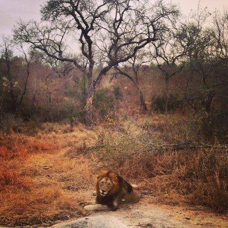 Arathusa Safari Lodge : One of our sightings..