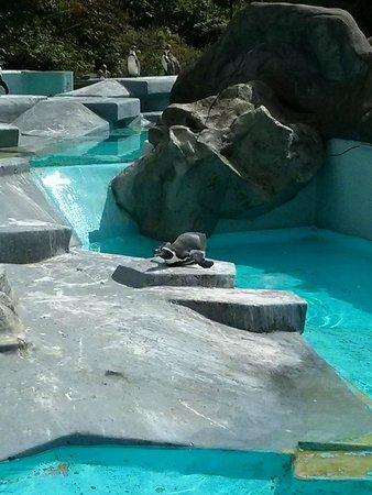 Kölner Zoo: Penguin