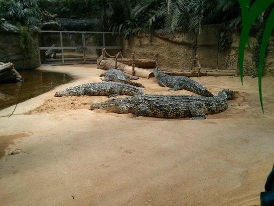 Koelner Zoo : Crocodiles