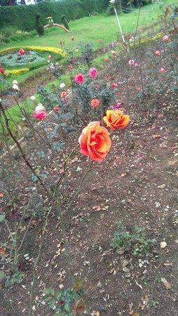 Rose Garden: ahhh!! The color!!!