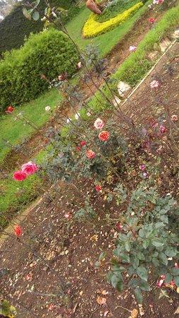 Rose Garden: sparse, yet beautiful