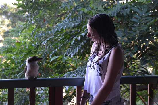 Mossman Gorge Bed and Breakfast: Lovely Kookaburra