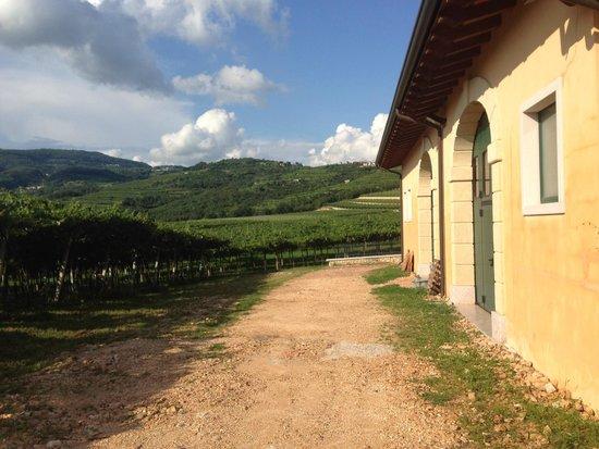 Pagus Wine Tours : Vingården