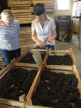 Pagus Wine Tours : Tørring af druer foregår i disse kasser.
