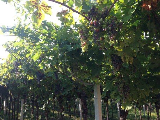 Pagus Wine Tours : Druerne