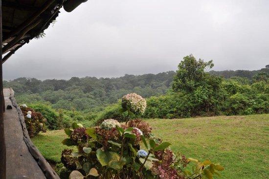 Castle Forest Lodge: Uitzicht bij restaurant