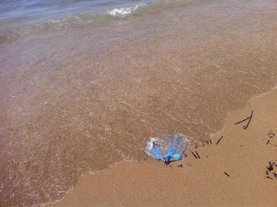 Kavouri Beach: Plastica again