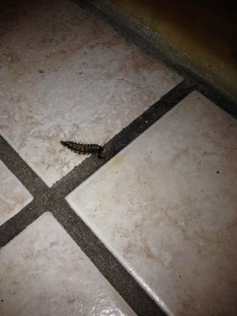 Edgewater Inn: Critters crawling around!