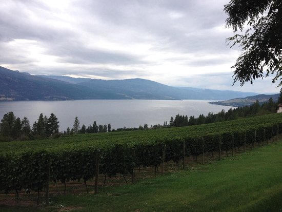 Arrowleaf Cellars : Beautiful views!