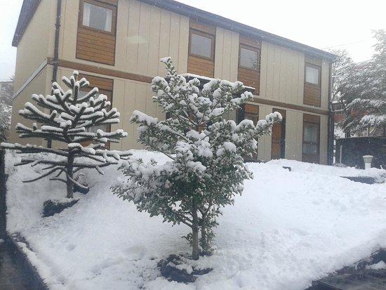 Hostal Del Bosque Apart Hotel: Jardin interno