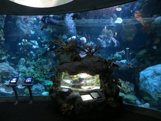 Shedd Aquarium: Wild reef section
