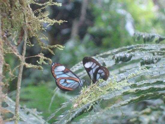 Las Tangaras Reserve: LAS TANGARAS