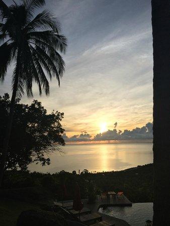 Jungle Club: Sunrise over the pool