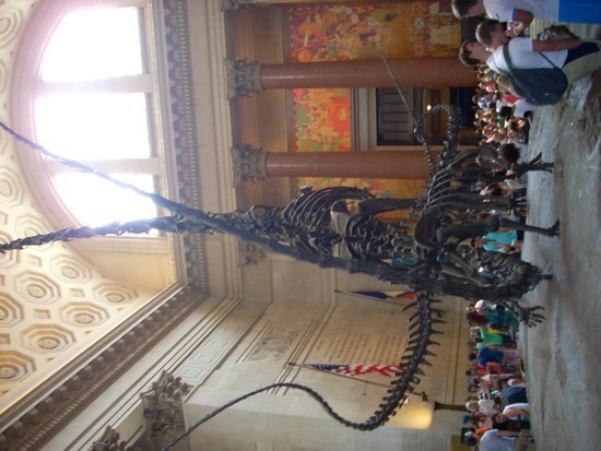 American Museum of Natural History : Squelette de dinosaure
