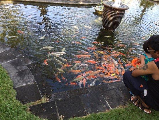 Discovery Kartika Plaza Hotel: 鯉のエサやり体験