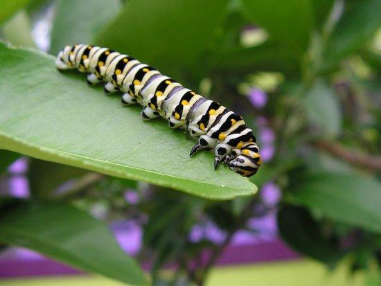 Norfolk Botanical Garden : Butterfly House