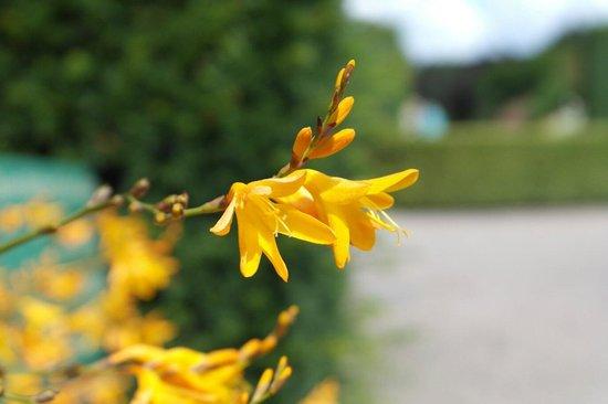 RHS Garden Rosemoor: :)