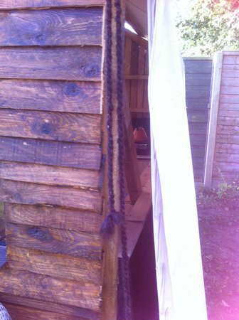 Norfolk Glamping & Yurt Holidays: Outside view of the side wall of the shed.