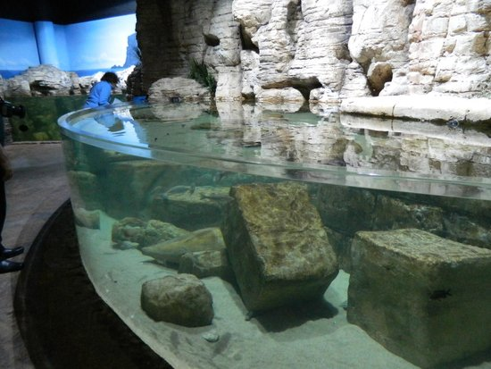 Malta National Aquarium: One of the tanks
