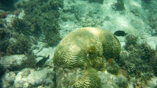 Catalonia Riviera Maya: snorkel