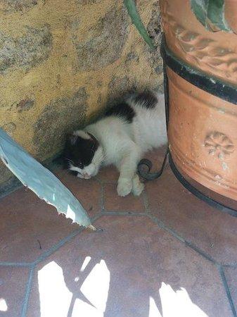 Hotel Attiki: gatto stanco
