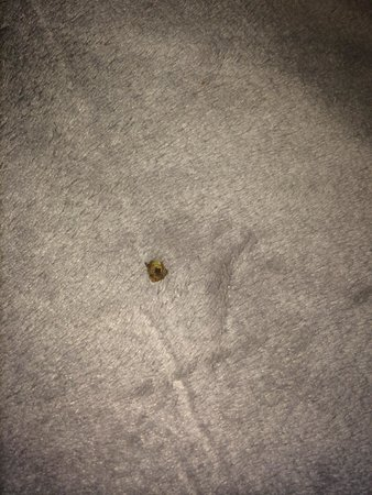 Travelodge Napa Valley : Room not cleaned - Bugs