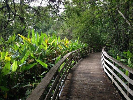 Corkscrew Swamp Sanctuary: Birds eye view to the swamp beneath