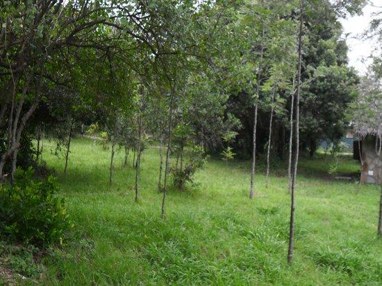 Sentrim Mara Camp: ground