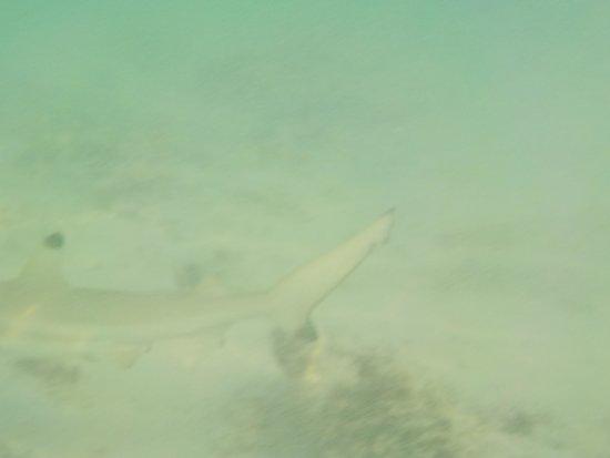 Perhentian Island Resort: squaletto a riva davanti al pir