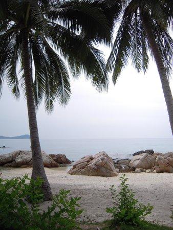 Perhentian Island Resort: coral