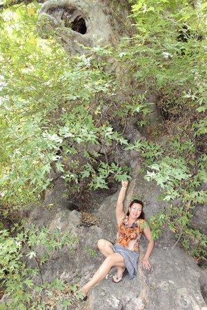 Sacred Monastery of Arkadi : огромное дерево платан в деревне Краси.Ствол .обхватывают 20 человек