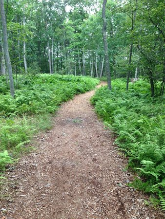 The Lodge at Woodloch : Trail