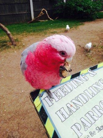 Tropical Birdland: Feeding was fun
