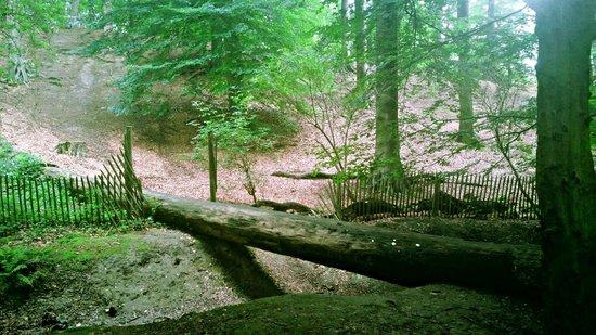 Forêt de Soignes : Foret des  Soignes
