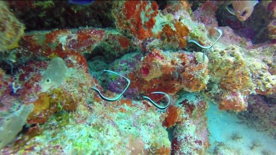 Jolly Dive Center: Jolly Dive visit 11th August 2014