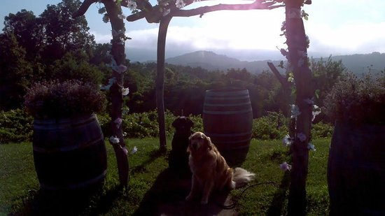 Benmarl Vineyards and Winery: lovely spot for a wedding...or a photo of your dogs!