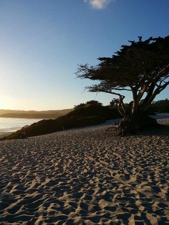 Carmel City Beach / Carmel River Beach: Carmel Beach: So beautiful